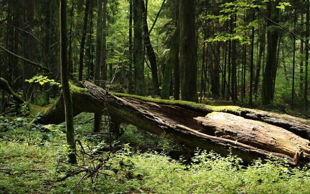 Urwald in Fröndenberg?